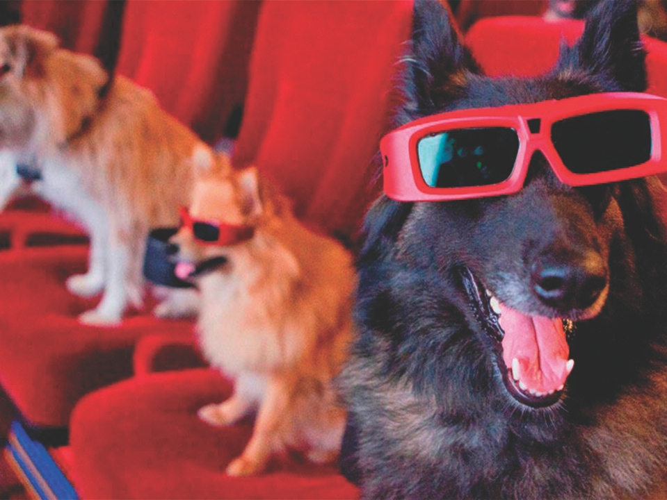 Dogs wearing 3D glasses at the cinema.