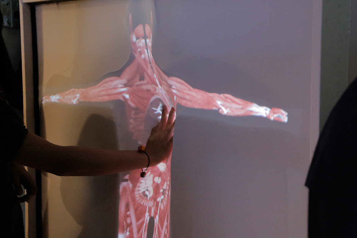 An anatomical illustration of the muscles of the human body projected on fabric that a person is pressing