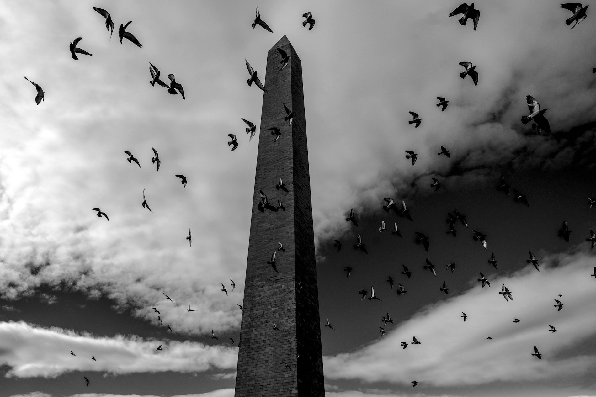 Black & white photo of pigeons flocking around Washington Monument