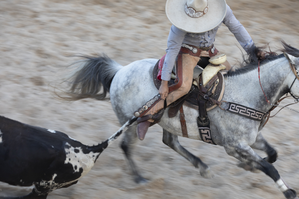 cowboy on horseback performs a grab on livestock