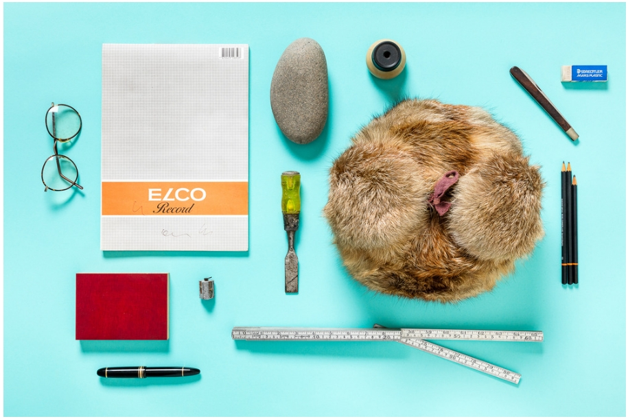 studio photo of found objects on a solid blue background