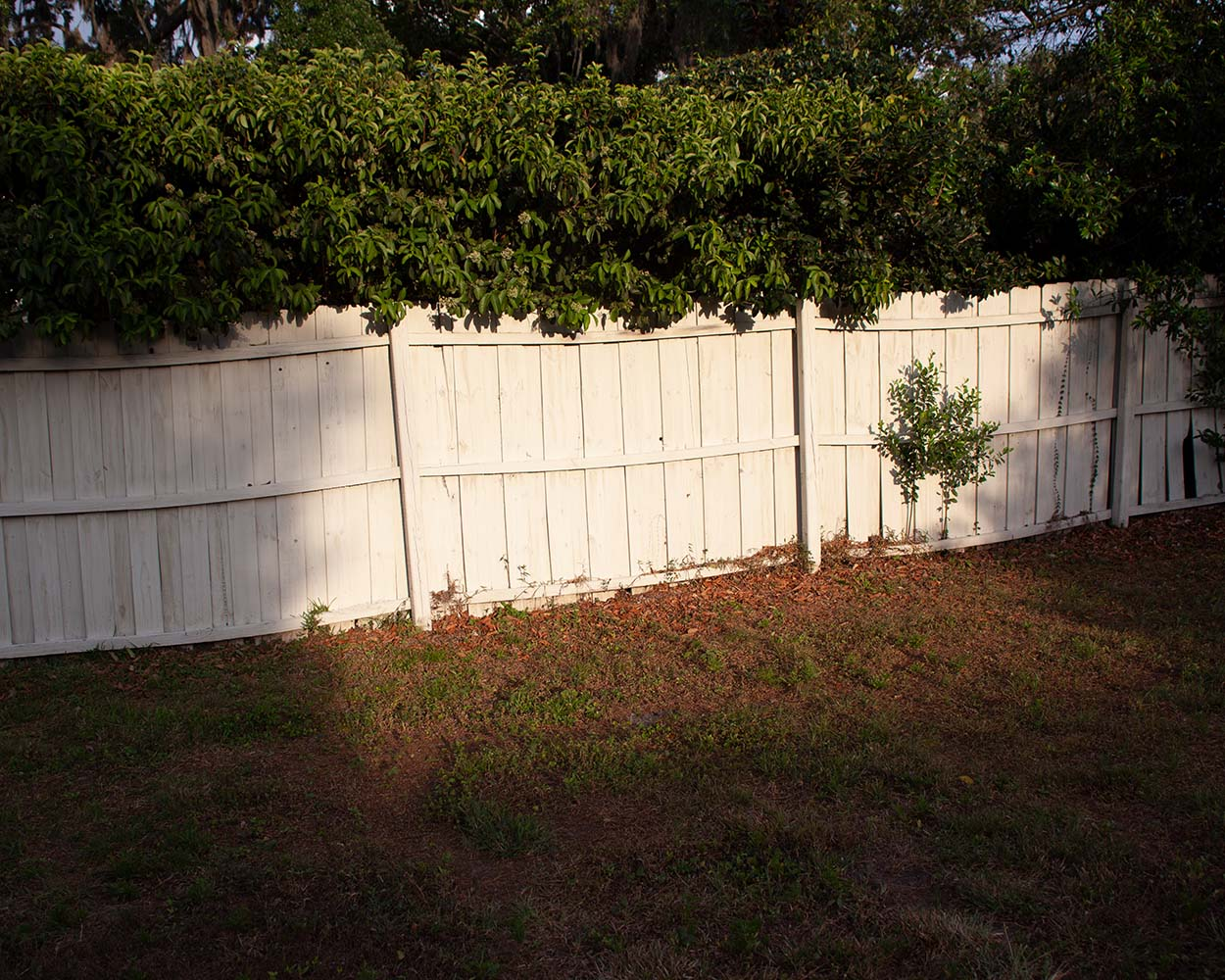 color photo of evening light on white picket fence
