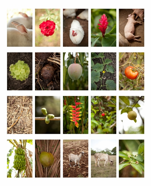 Collage of images showing flowers, animals, and crops.